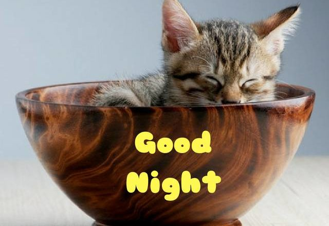 good night sweet dreams,